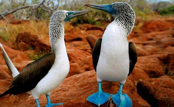 Extension aux Galapagos en sept jours