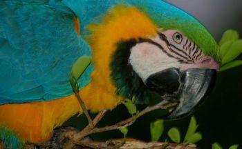 Extention en Amazonie, Cinq jours - quatre nuits