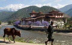 Circuit classique au Bhoutan avec trek