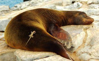 Extension aux Galapagos en onze jours