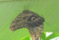 Voyage au Costa Rica, le paradis vert !