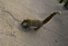 Voyage au Paraguay : La faune paraguayenne