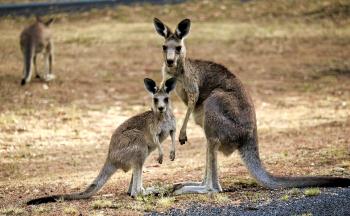 Voyage sur-mesure en Australie : La Tasmanie en quatorze jours