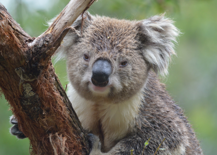 Voyages Tendance et Voyages à Thèmes en Australie