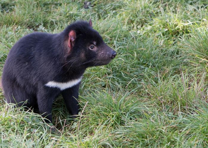 Autotour en Australie : la nature de la Tasmanie en six jours