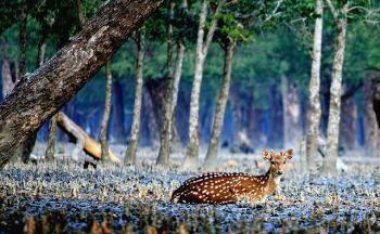 Voyage au Bangladesh: Les Sundarbans, trésor caché