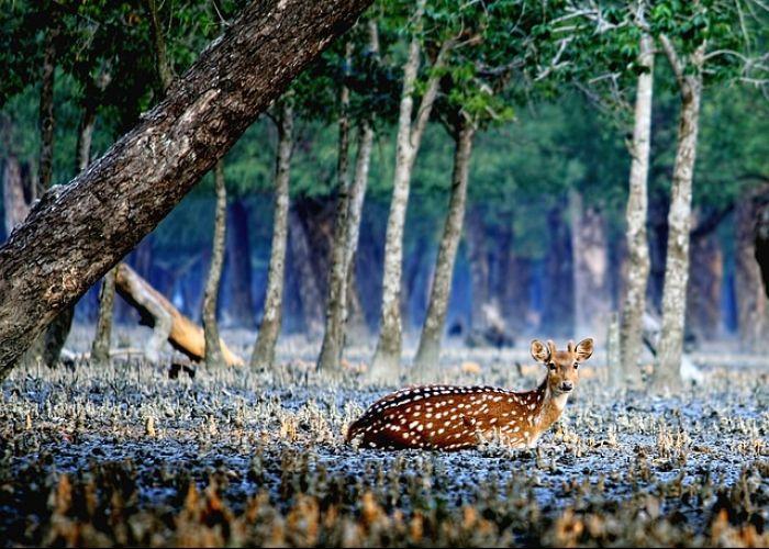 Voyage Bangladesh : Les Sundarbans, trésor caché