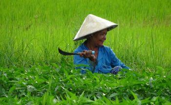 Séjour sur-mesure Cambodge : Extension à Mondolkiri en cinq jours