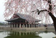 Voyage en Corée du Sud: Le Festival des Cerisiers en fleur