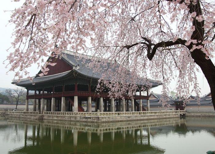 Circuit Corée du Sud : Le Festival des Cerisiers en fleur