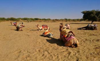 Essentiels du Rajasthan en groupe en treize jours