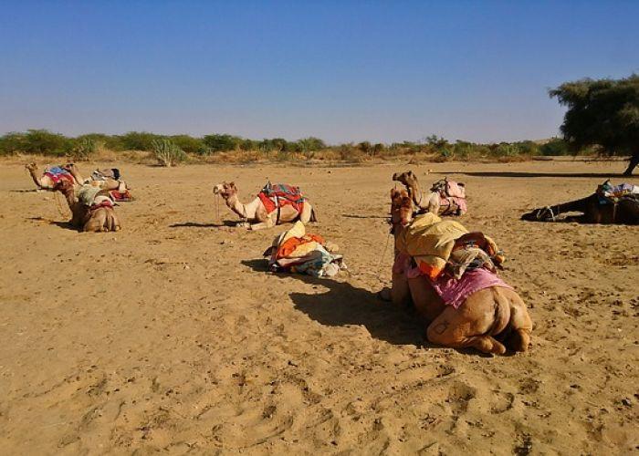 Voyage en groupe en Inde: découverte du Rajasthan en treize jours