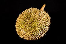 Voyagiste Indonésie : Le Durian