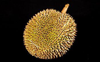 Voyage en Indonésie: Le Durian