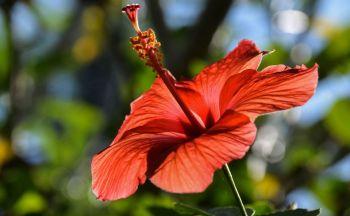 Séjour sur-mesure en Indonésie : Lombok en quatre jours