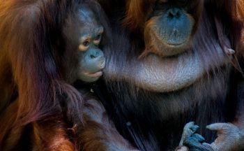 Extension à Sumatra en huit jours