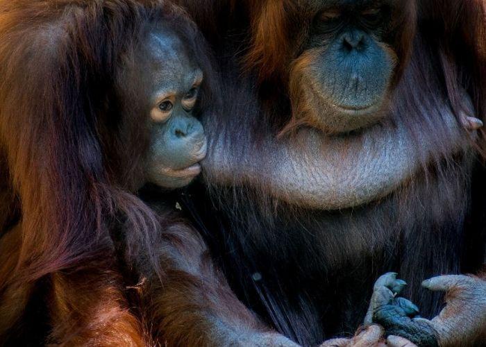 Circuit sur-mesure en Indonésie : extension à Sumatra en huit jours