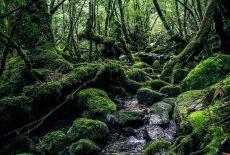 Voyagiste Japon : Yakushima