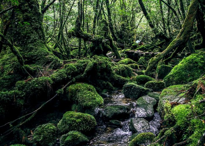Voyagiste Japon : Yakushima