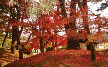 Séjour Japon : Le Korakuen d'Okayama