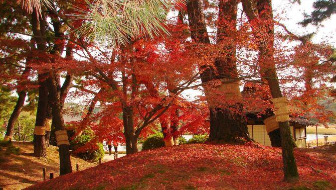 Le Korakuen d'Okayama