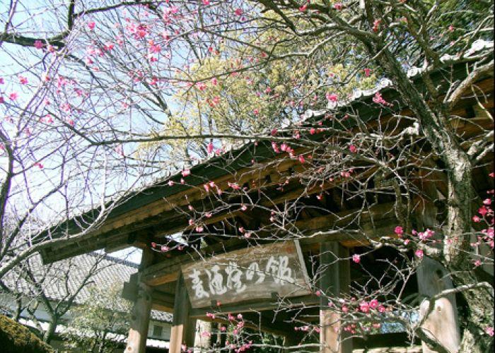 Circuit classique au Japon et extension pastorale en quinze jours