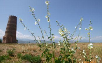 Voyage combiné : Kazakhstan - Kirghizstan - Ouzbékistan - Turkménistan en seize jours