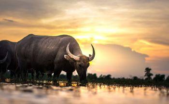 Voyage découverte du Nord du Laos en quatorze jours