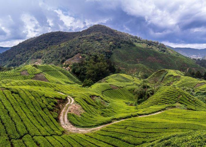 Circuit sur-mesure en Malaise: Camerons Highlands en trois jours