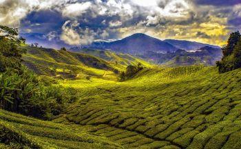 Circuit sur-mesure en Malaisie : Camerons Highlands en trois jours