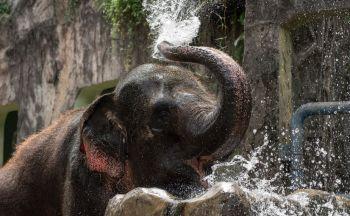 Extension au sanctuaire des éléphants en un jour