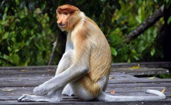 Extension à la rencontre des singes en deux jours