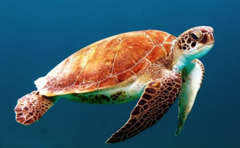 Séjour organisé en Malaisie : les tortues de Selingan en trois jours