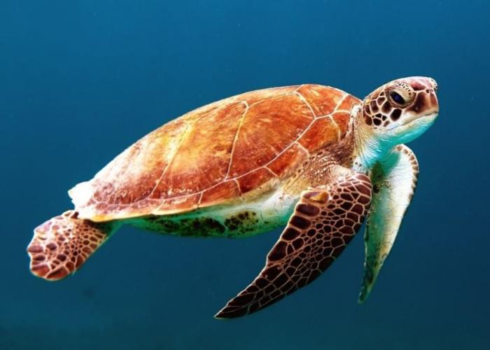 Extension à la rencontre des tortues géantes sur l'île de Selingan en trois jours