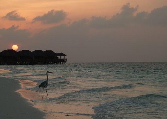 Voyage combiné au Sri Lanka et aux Maldives en quinze jours
