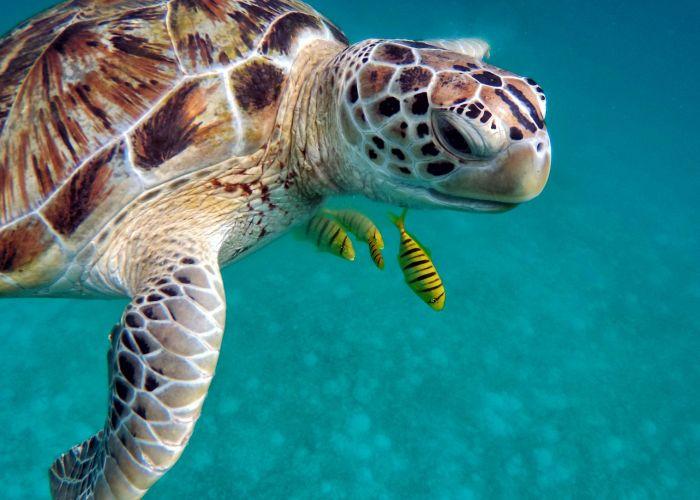 Séjour sur-mesure aux Maldives: exploration en six jours