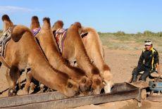 Voyage Mongolie : Saisons, programmes et formules
