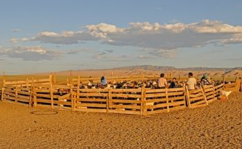 Voyage sur-mesure Mongolie : Le désert de Gobi
