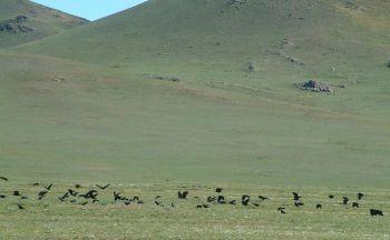 Extension dans le désert de Gobi en trois jours