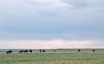 Voyage en Mongolie: Le monastère d'Amarbayasgalant en trois jours