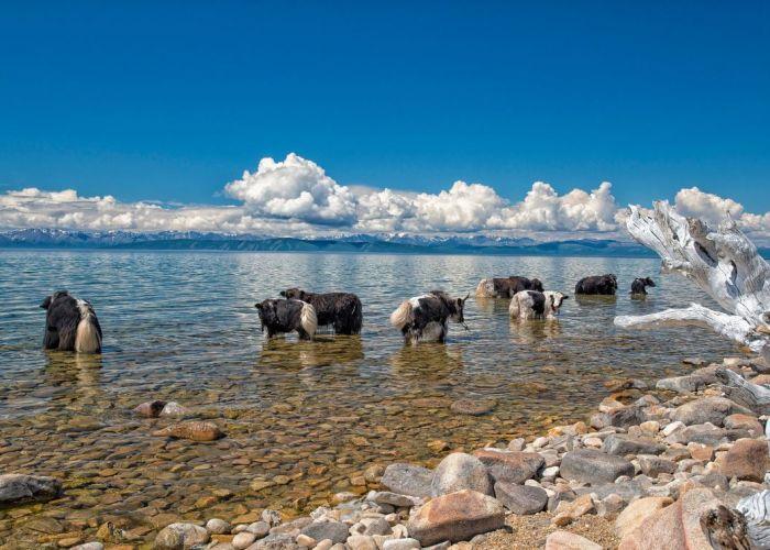 Circuit organisé en Mongolie: les sites incontournables en treize jours
