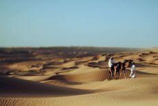 Voyage à Oman : idées sur l'organisation