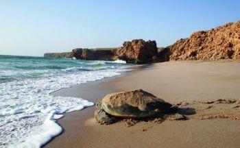 Circuit sur mesure à Oman : découverte du Nord au Sud en onze jours