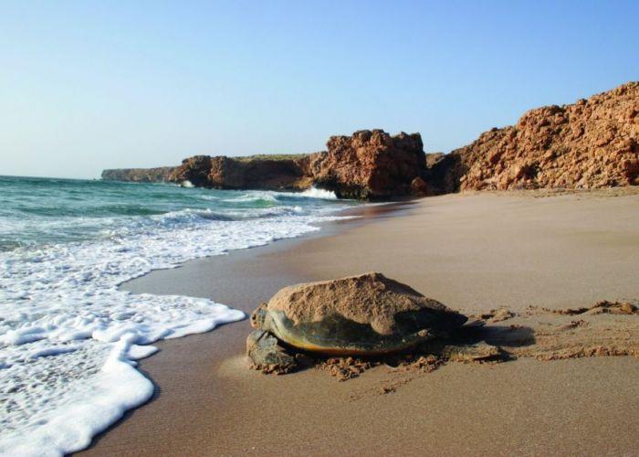 Voyage découverte du Sultanat d'Oman, du Nord au Sud en onze jours