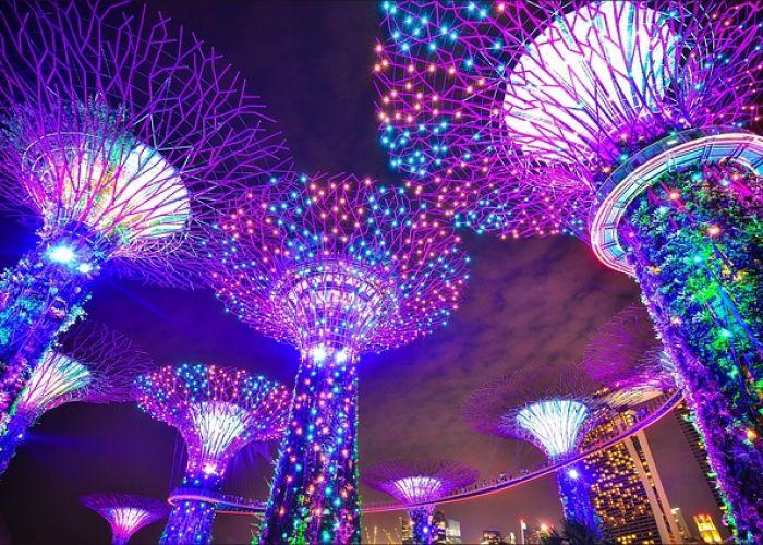 Voyage à Singapour : jardin botanique