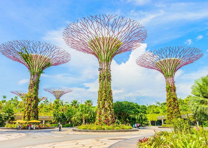 Voyage Singapour : Le Jardin Botanique