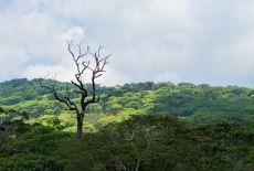 Voyage au Sri Lanka : La réserve forestière de Sinharaja