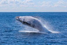 Circuit Sri Lanka : Observer les baleines à Mirissa
