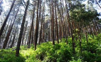 Circuit individuel Sri Lanka : La réserve forestière de Sinharaja