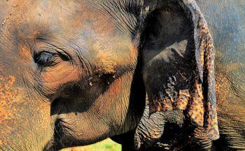 Découvrir le Sri Lanka en Estampe, quatorze jours